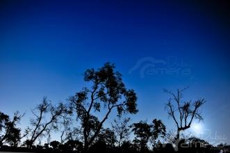 Trees at night 2