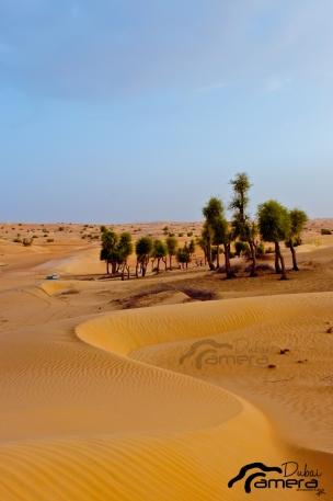 Desert Portrait
